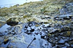 Dalian les conséquences désastreuses de la marée noire