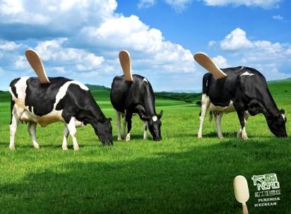 Des Glaces «100% lait»