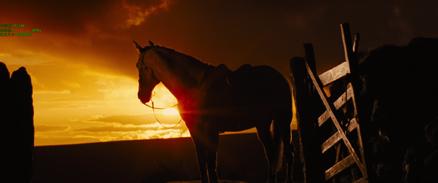 Les chevaux, un créneau économique en Chine