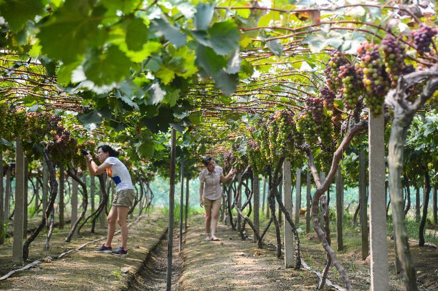 La Chine instaure enfin des marques déposées pour les propriétés vignobles