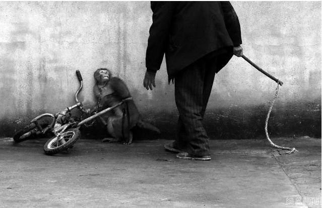 6 photographes chinois récompensés au World Press Photo Contest